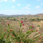 Soma view