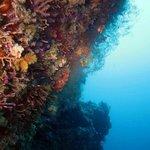 Dykning och snorkling