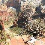Scout's Landing at Zion National Park