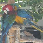 Ils y a plusieurs variétés de Perroquets