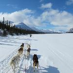 Dog mushing across a frozen lake.