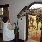 I am feeding giraffes after being there only 15 minutes - Amazing