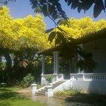 El Dorado de día con lapachos en flor de fondo!