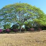 arbre dans le parc