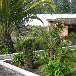 Tropical yard