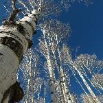 Aspens at McClure Pass