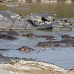 Hippos outside the camp