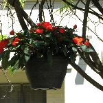 Hanging basket in the gazebo