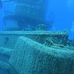 Stuart Cove's Dive Bahamas Bild