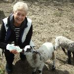We were able to feed the baby lambs....