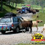 Virginia Safari Park --- TEMPORARILY CLOSED