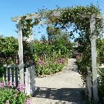 The trellis in the garden