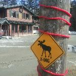 Moose crossing sign in driveway