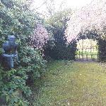 Small spring garden.