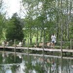 John and goats crossing the bridge!