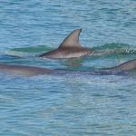 delfini a monkey mia