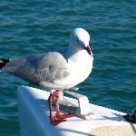 gabbiano sulla barca