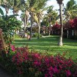 Carribbean Village Grounds