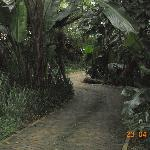 Pathways trought milkwood forest