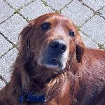 Beans our ambassador and lovable pet
