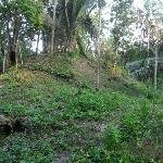 Un-excavated Mayan ruins at Lower Dover