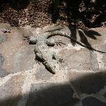 Lizard in Pool Area