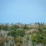 Hog bay park view