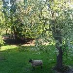 beautiful view when you open the windows, where there are sheep, and beautiful scenery outside t