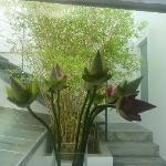 Lotus flowers in our room!