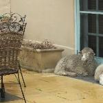 Villa Provence residence sheep