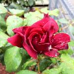 144 Keppel st Rose Cottage