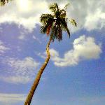 My fave spot on the beach...next to this coconut tree :)