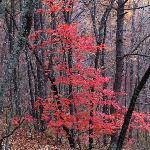 Taken last fall