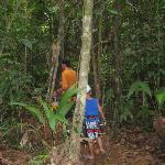 Hiking through the trees