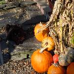 Some one in the pumpkin patch...