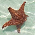 dancing starfish