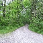 Part of the 1/4 mile driveway back to the cabin