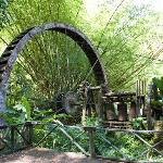 Some of the machinery being reclaimed by the forest