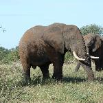 We saw several herds of Elephants