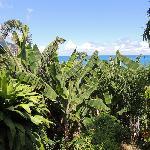 vue sur le jardin et l'océean