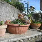 alcune piante del terrazzo