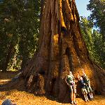 Family at base of giant sequoia tree