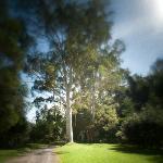 Take a stroll through National Park