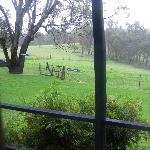 From the rear verandah