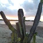 Cactus on the private gulf shore