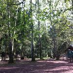 Wildpark Rolandseck Foto