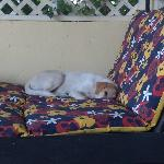 Neighbor's dog sleeping on our porch