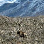 Random Wild life near Ferroch
