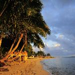 coconut trees and sandy beach in the golden morning glow