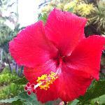 fleur du jardin devant les studios